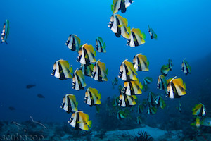 group-of-fish-underwater-02